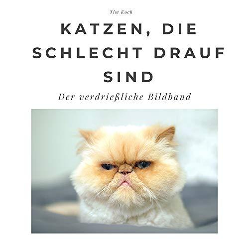 Katzen, die schlecht drauf sind: Der verdrießliche Bildband