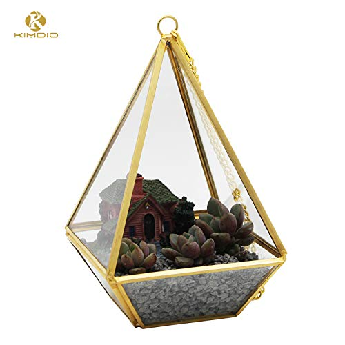 Cube glass terrarium for air plants