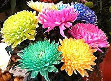 VISTARIC 100pcs / bag Kleine Freesie, Freesie Samen Bonsai Blumensamen Exotische Samen Gartendeko Topfpflanze für den Garten zu Hause