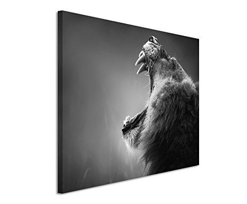 50x70cm Leinwandbild schwarz weiß in Topqualität Brüllender Löwe