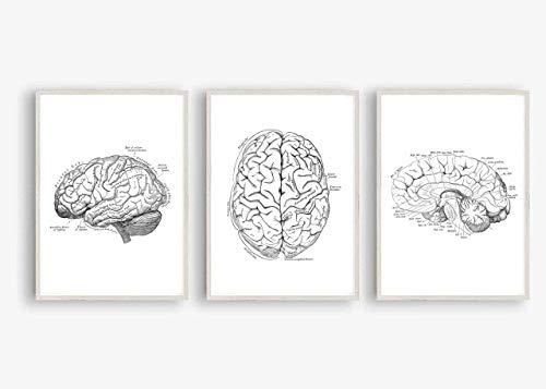 Kunstdruck Din A4 ungerahmt 3-teilig - Gehirn Gehirnhälften Mensch Anatomie Zeichnung Medizin Arzt Neurologie Poster Bild