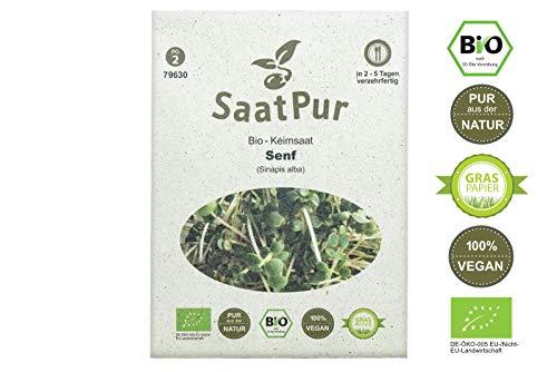 SaatPur Bio Keimsprossen - Senf Mustard - Sprossen, Microgreens - 50g