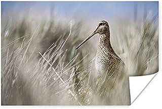 Poster Watersnip - Poster watersnip tussen hoge riet - 180x120 cm XXL
