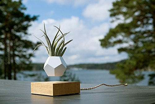 Flyte Lyfe Magnetic Floating Levitating Plant Pot for Plants with Oak wood base (12-Sided Geodesic Silicon Planter)