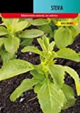 Semillas de Estevia 25 Semillas de Stevia Rebaudiana Bertoni Edulcorante Natural
