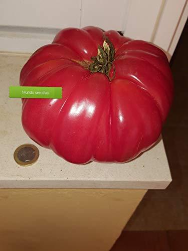 Portal Cool Salades Johnson géAnt Tomate 100 Graines