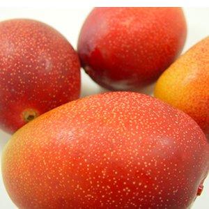 宮崎県産完熟 マンゴー 3個入り ( 1個:230〜300g ) 宮崎マンゴーの最高等級品
