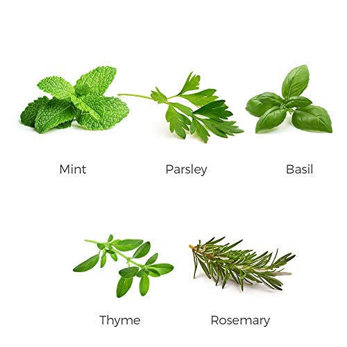 Environet Herb Garden Seeds Collection - 5 Culinary Herb Seeds Pack - Basil, Mint, Parsley, Thyme and Rosemary, Non-GMO Heirloom Seeds for Planting