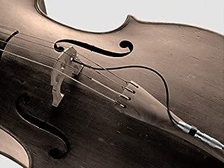 Best schertler cello pickup Reviews