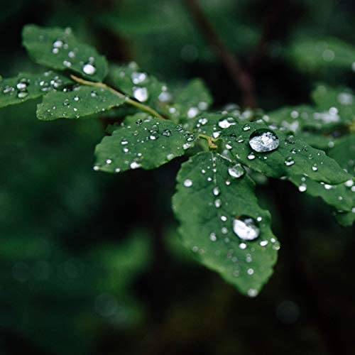 Sounds of Nature Relaxation, Nature Sounds for Sleep and Relaxation & Meditation Rain Sounds