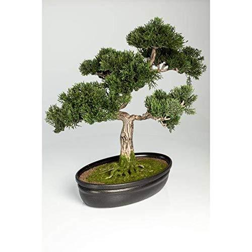 artplants.de Bonsái de Cedro Artificial en Cuenco Decorativo, 230 Ramas, 40cm - Bonsái Decorativo - Bonsai Artificial