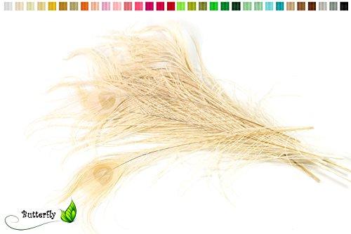 10 echte Pfauenfedern ca. 25-30cm (champagner 815)//Pfau Federn Natur Auge Deko Pfauenaugen Schmuck