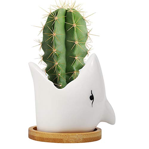 colmanda Cerámica Macetas, Macetas Suculenta Cactus Florero de Animales con Agujeros de Drenaje, Suculentas Macetas para Escritorio, Hogar, Jardin Decorativa - Tiburón