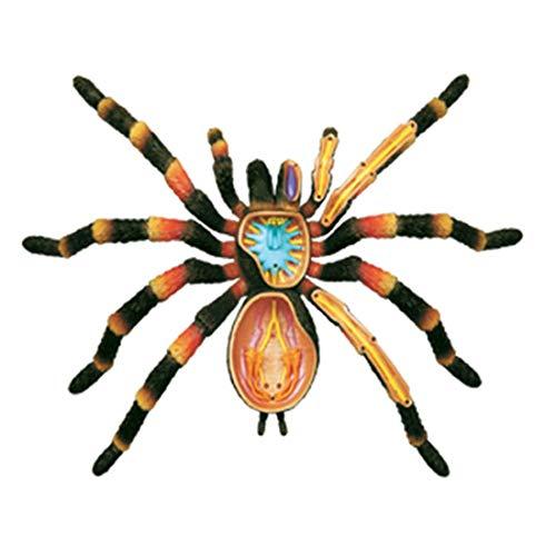 Lehrmodell 4D Spider Anatomy Model Kit, Lernspielzeug für die Zusammensetzung der Tierskelettzusammensetzung