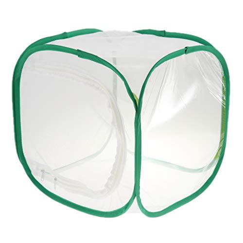 Fenteer Boîte De Reproduction pour Enclos De Fourrage pour Ferme De Nid D'insectes - Vert + Noir, 35x35x60cm - Vert + Blanc, 30x30x30cm
