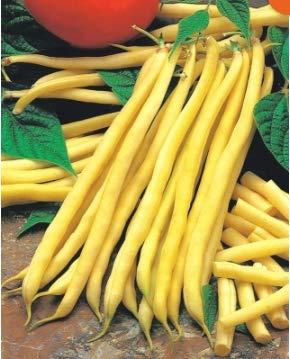 Beautytalk-Garten BIO Zwerggrüne Bohne Samen Gemüsesamen- gelbe grüne Bohne