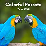 Parrots Calendar 2022 - 12 Months of High-Resolution Vibrant Parrot Photos Including Official Holiday Prompts US/UK/CA + Notes