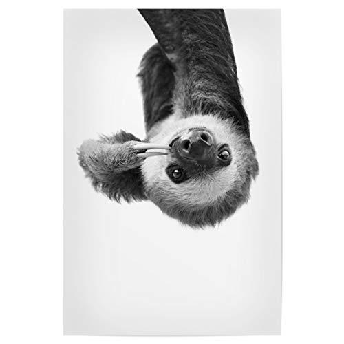 artboxONE Poster 30x20 cm Tiere Little Sloth - Bild Black and White Black and White Cute