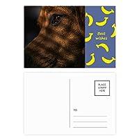 ペットと動物の感傷的な絵 バナナのポストカードセットサンクスカード郵送側20個