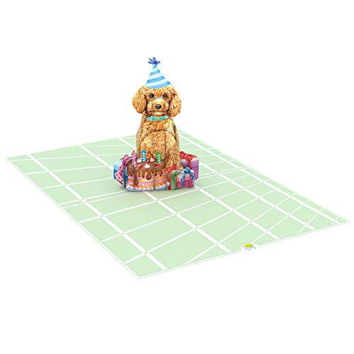 Munchkin Land Happy Birthday Poodle with Gifts Cake Pop Up Card, 3D Popup Greeting Cards | 5' x 7' with Envelope and Customised Note