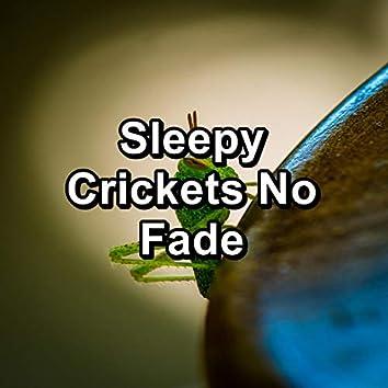 Sleepy Crickets No Fade