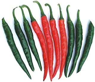 Tejaswini MHP-1 (Indian Sub-Continent) Pepper Seeds F1 (20 Seed Pack)