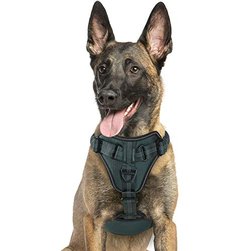 rabbitgoo Dog Harness No Pull, Adjustable Dog Walking Harness with 2 Metal Clips & Shock-Absorbing Bungee Straps, Soft Padded Pet Vest Reflective Chest Harness with Handle for Large Dogs (Green, L)
