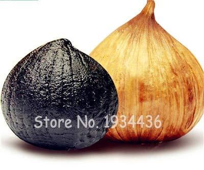 AGROBITS 100 Unids Plantas de Ajo Negro Saludables Bonsai DIY Home Garden Cebolla RARA Ajos Cocina Condimento Deliciosa Verdura Picante Vegetal: 4