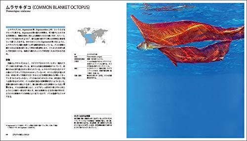 世界一わかりやすいイカとタコの図鑑