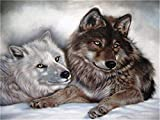 Xpboao Pintar por números DIY - Lobo Animal - Kit de Pintura por números Adultos Niños Junior para - para la decoración de la Pared del hogar - 40x50cm - Sin Marco