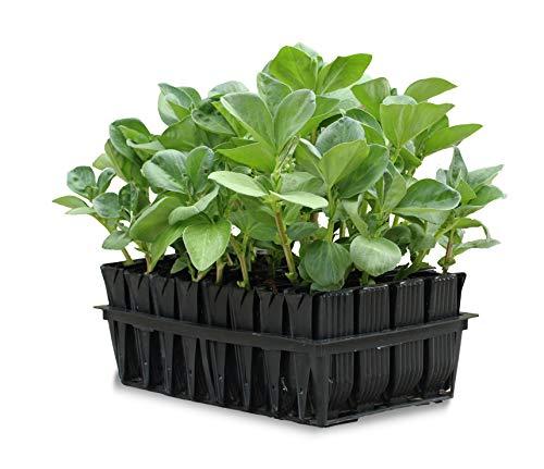 Tierra Garden Haxnicks Anzuchtschalen für Saatgut und Ableger