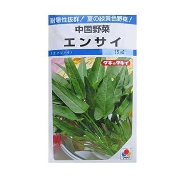 中国野菜 タキイ エンサイ(空芯菜)