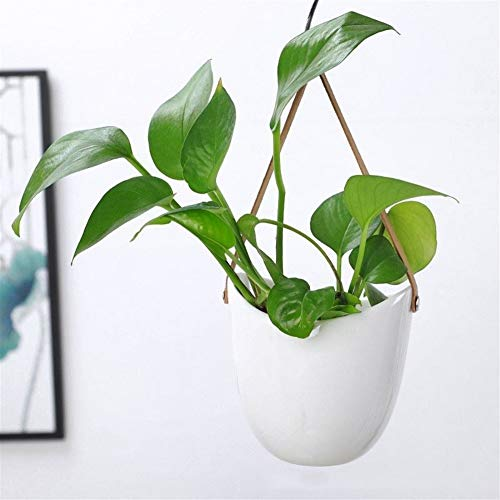 WBFN Keramische Hangende Planter for Succulent, Cactus, Air planten, House hangpotten Set Moderne Decoratieve Bloempotten Elegant Water Planter for Indoor Outdoor Decor (wit) (Size : 9.5-9.7cm)