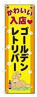 のぼり旗 ゴールデンレトリバー (W600×H1800)DOG、犬、ペットショップ
