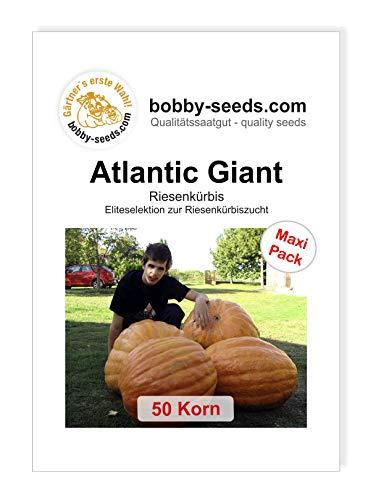 Atlantic Giant Competition Strain Kürbissamen von Bobby-Seeds, 50 Korn
