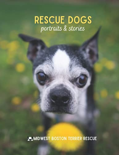Rescue Dogs 2021: Portraits & Stories: Midwest Boston Terrier Rescue