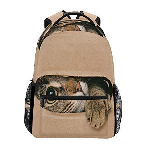 Mochila escolar gato mira hacia fuera la raja caja de cartón estudiante...