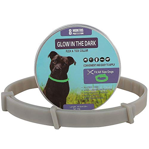 Collar de seguridad para perros y gatos, tamaño ajustable, suave, adecuado para perros pequeños, medianos y grandes