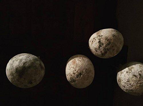 2.5 kg - Casizolu stagionato prodotto a Santu Lussurgiu. Formaggio sardo molto particolare, vaccino, a pasta filato, prodotto grazie ad una centenaria tradizione di caseificazione.