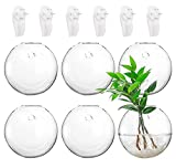 """Yarlung Set of 6 Wall Hanging Planters Terrarium, Glass Oblate Globe Plants Containers Wall Mount Flower Vase for Propagating Hydroponics Plants, Air Plants, Succulents, 4.7"""" D (Plants Not Included)"""