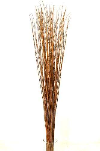 Green Floral Craft   90-100 Stem Dried Asian Willow Decorative Branches 4-5 Feet Tall - Perfect Home Decoration and Floor Vase Filler (Honey)
