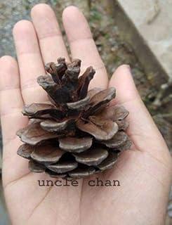 15の全体の果物:UNCLE CHAN * PINE CONE全体の果物HOME DIY CHRISTMAS TREE NATURはC733乾燥