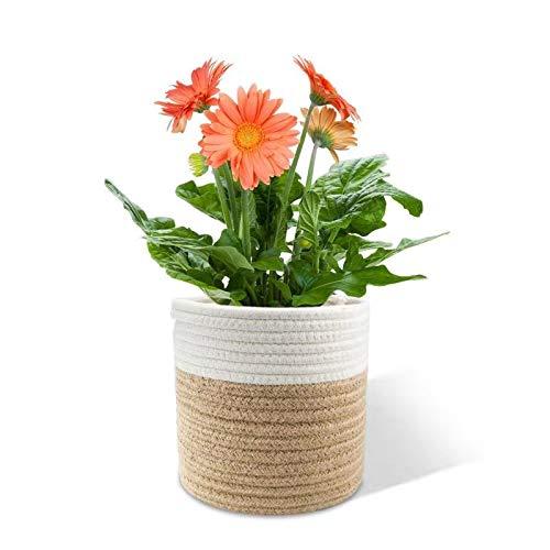 Halcyerdu Cesta de Planta 20 x 20 cm, Cesta de Cuerda de algodón para Plantas, Maceta de algodón,...