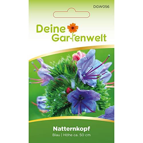Natternkopf blau | Gewöhnlicher Natternkopfsamen | Samen für Echium plantagineum