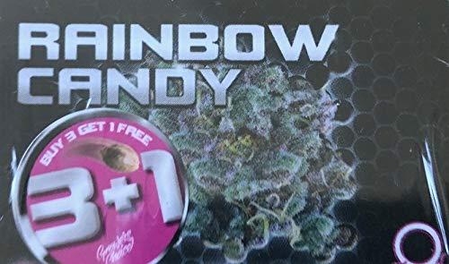 CANNA24 - 4 x Rainbow Candy Samen + original CANNA24 Grinder Kräutermühle