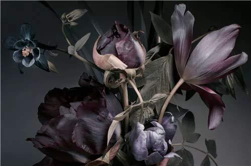 JHGJHK Carteles e Impresiones de Flores Vintage, Cuadros de Plantas de Arte de Pared Vintage, Pintura al óleo para decoración de Lujo de Fondo de Dormitorio de Dormitorio Familiar (Imagen 1)