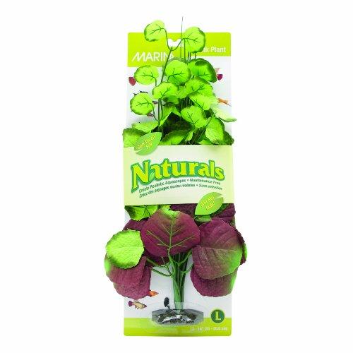 Marina Naturals Pennywort Silk Plant, Large