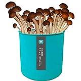 Setas Cultivo Kit Setas Autocultivo Ostra, Caja De Cultivo Casero De Setas Ostra, Kit De Bricolaje Para Cultivar Tus Hongos En Dos Semanasgold Oyster Mushroom(B)