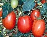 50 semillas de tomate Rio Grande