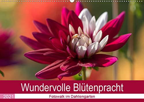 Wundervolle Blütenpracht - Fotowalk im Dahliengarten (Wandkalender 2021 DIN A2 quer)